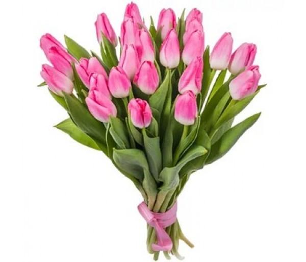 Нежные тюльпаны 25 шт