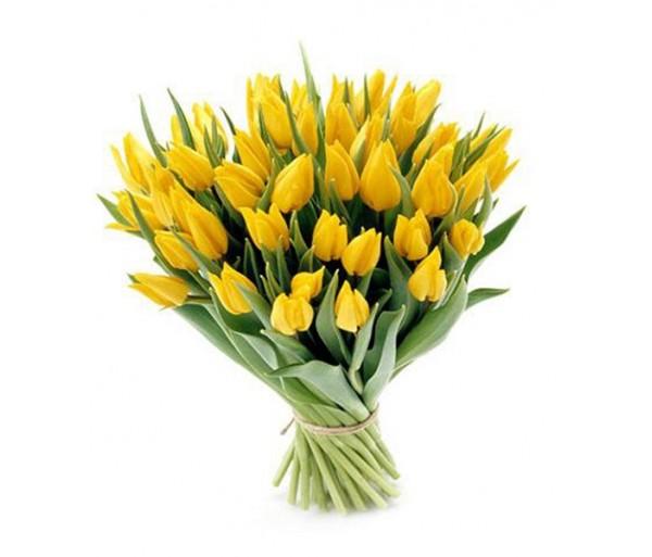 Желтый тюльпан 51