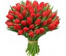 Красный тюльпан 51