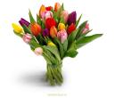25 Тюльпан ассорти