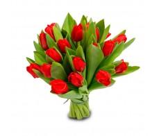25 красный тюльпан