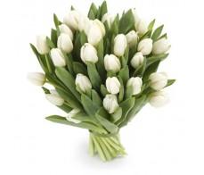 Белые тюльпаны 25 шт.